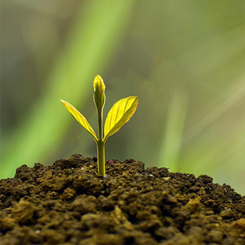 Ambitie plantje groei